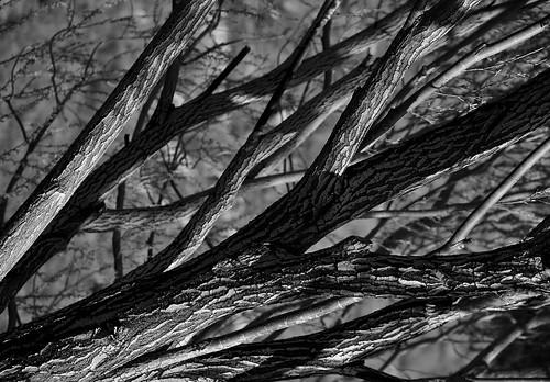 eechillington nikond7500 viewnxi utah hiddenvalleypark tree pattern nature sandy monochrome