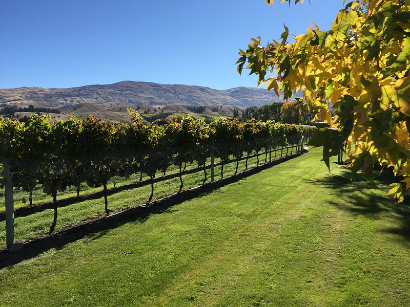Central Otago experiences - Wooing Tree Winery Cromwell