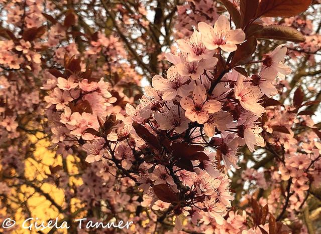 April - und alles blüht