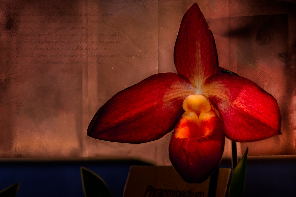 abstract macro orchid