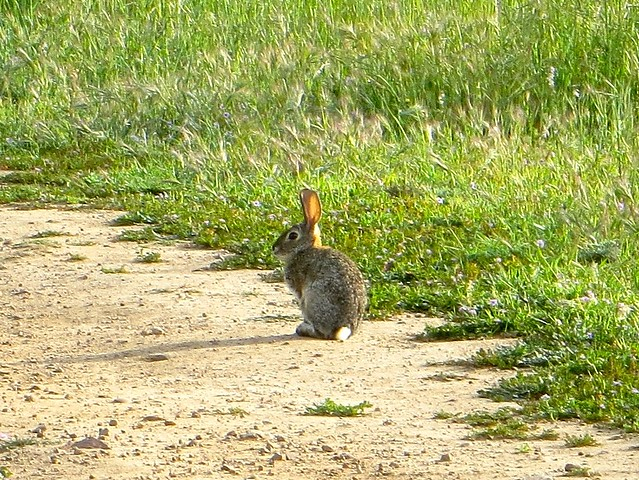 it's bunny time in Malibu