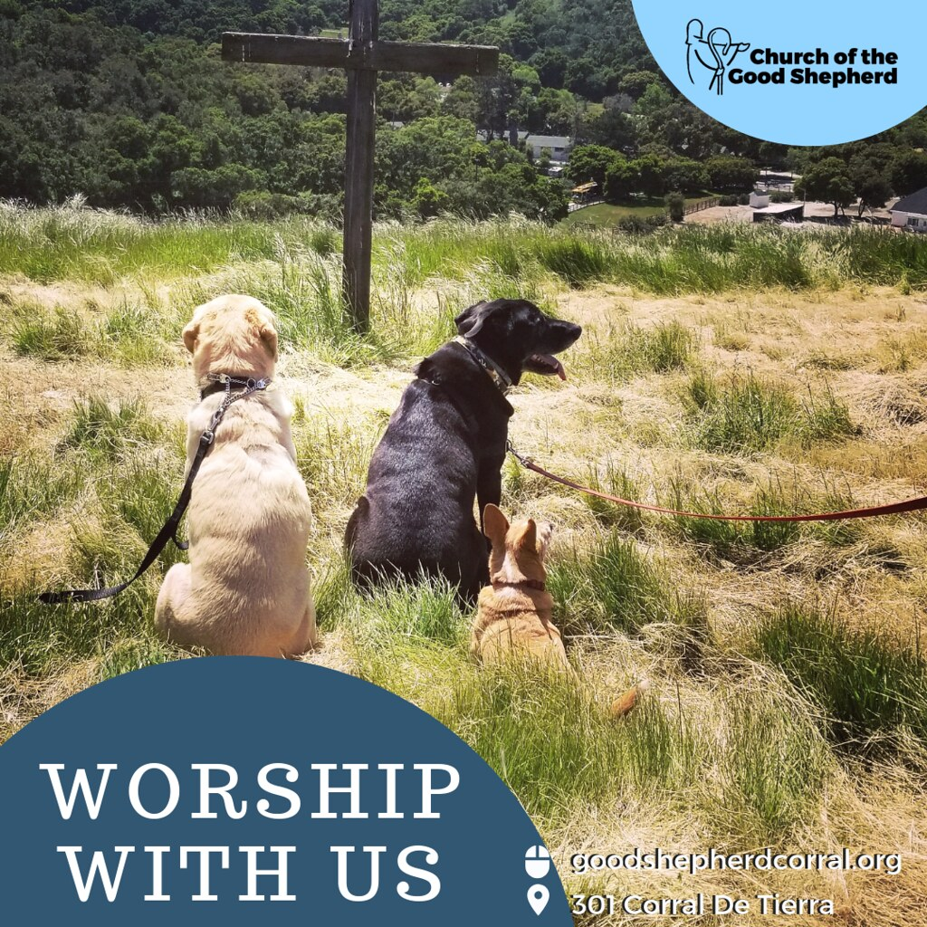 Worship With Us - Dogs