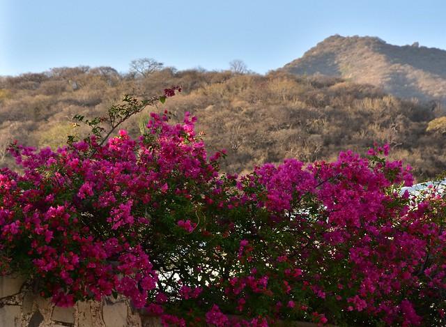 Mexico - Ajijic