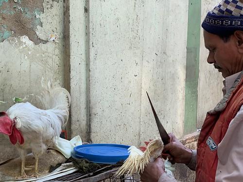 Mission Delhi - Mukesh the Chicken, Old Delhi