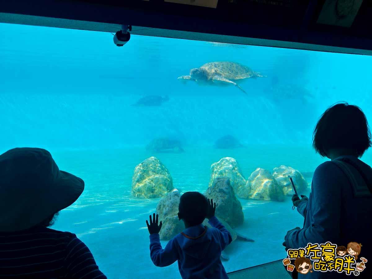 沖繩美麗海水族館-12