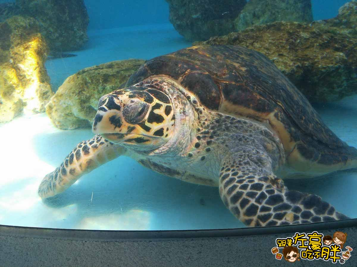 沖繩美麗海水族館-11