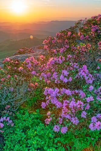 sunrise hawksbillmountain linvillegorge carolinarhododendron mountain mountains morning flowers gorge northcarolina goodfriday easter