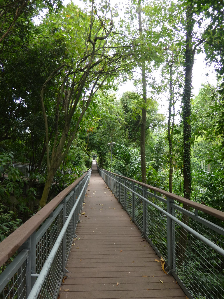 Along the forest trail on Sentosa Island
