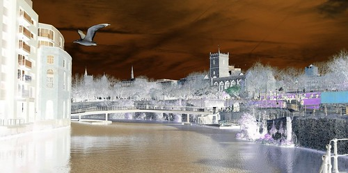 bristol bridge seagull buildings water people outdoors outside nature naturephotography sun sunshine clouds day night church grass blue white black orange fun shadows life colours sky tree trees green art yellow