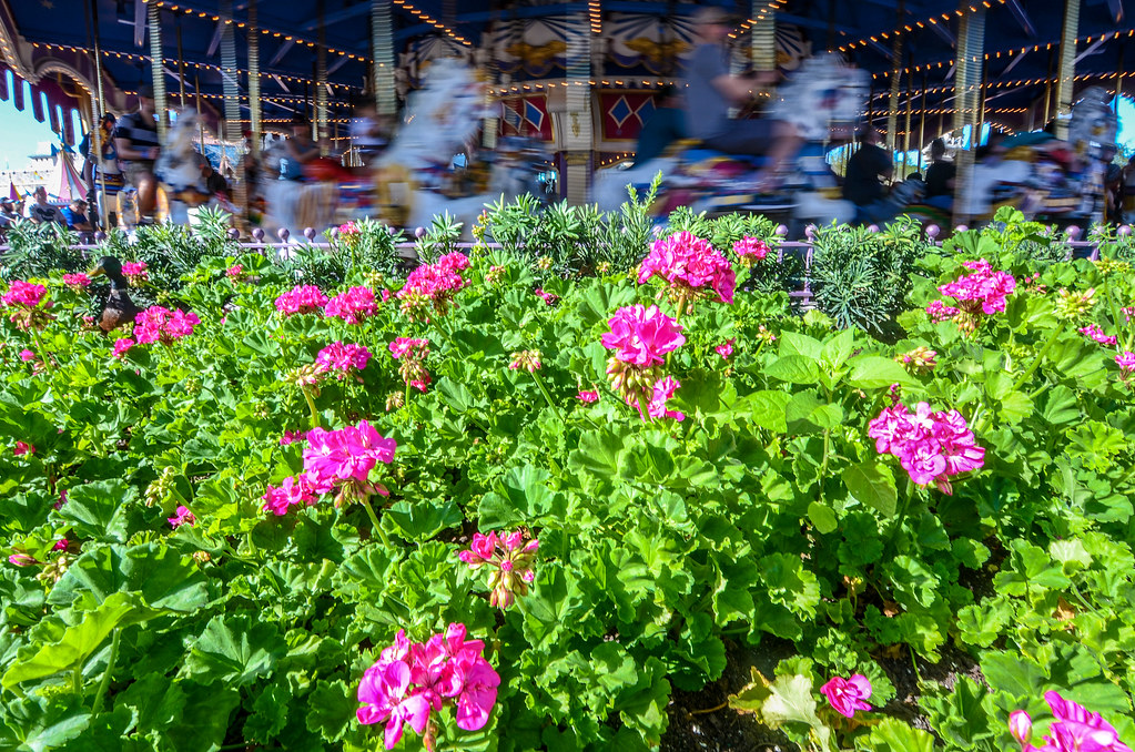 Flowers and carousel MK