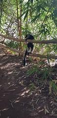"""""""Ma 1ère semaine à Madagascar s'est très bien passée. Les membres de ma famille d'accueil sont vraiment très gentils et prévenants, ils font très attention à moi."""" - Florence"""