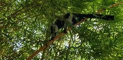 Florence, adhérente de l'association Globalong, s'est engagée comme éco-volontaire pour la conservation des lémuriens sur l'île de Madagascar