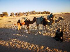 Travesia en camellos al Desierto del Sahara Douz Tunez 05