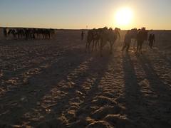 Travesia ruta en camellos al Desierto del Sahara Douz Tunez 01