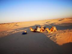 Travesia ruta en camellos al Desierto del Sahara Douz Tunez 04
