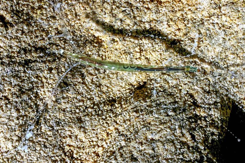 HIGH RES Spellbound larva closeup