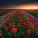 [ ... red carpet ] by D-P Photography