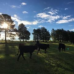 The beauty of morning #farmchores