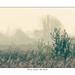 Misty across the marsh.jpg