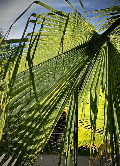 Through the palm, brightly