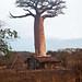 8232_Madagascar House