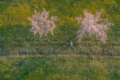 Sakura Park | Kaunas aerial