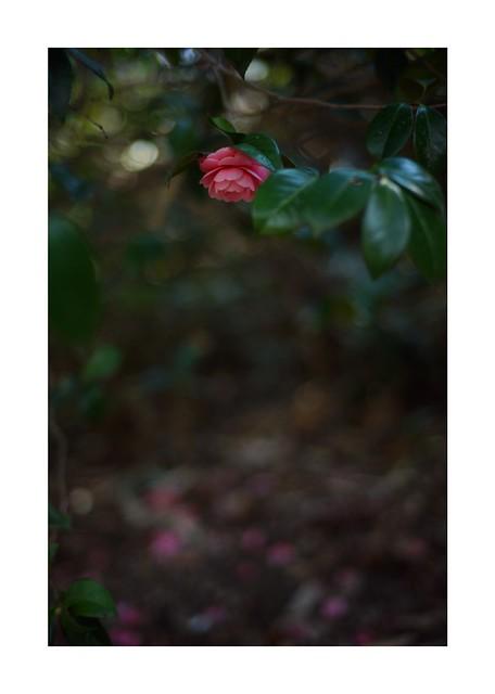 2019/3/17 - 5/15 photo by shin ikegami. - SONY ILCE‑7M2 / Carl Zeiss C Sonnar T* 1.5/50 ZM