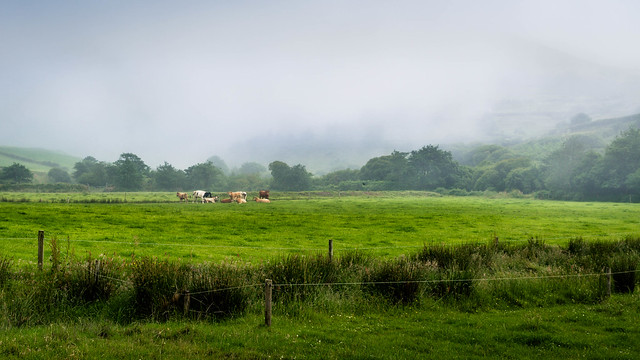 Countryside Ireland