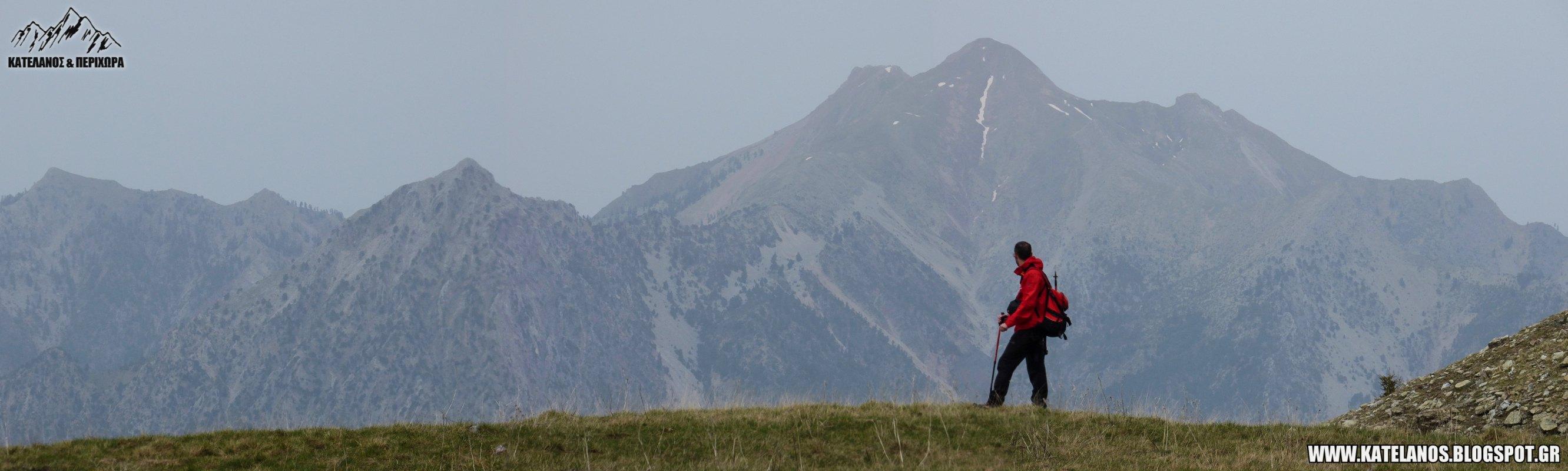 mountain chelidona