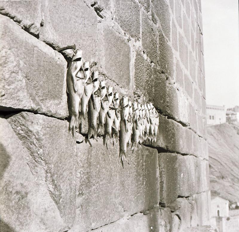 Peces recién pescados en el Tajo secándose al sol en un alambre clavado en el Puente de San Martín en los años 50. Fotografía de Victoriano de Tena Sardón