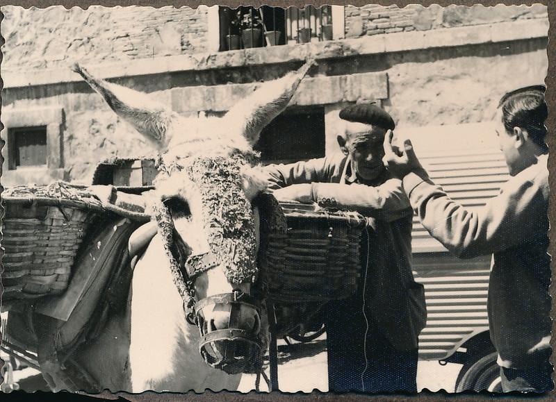 Un burro en Toledo a mediados del siglo XX. Fotografía de Victoriano de Tena Sardón