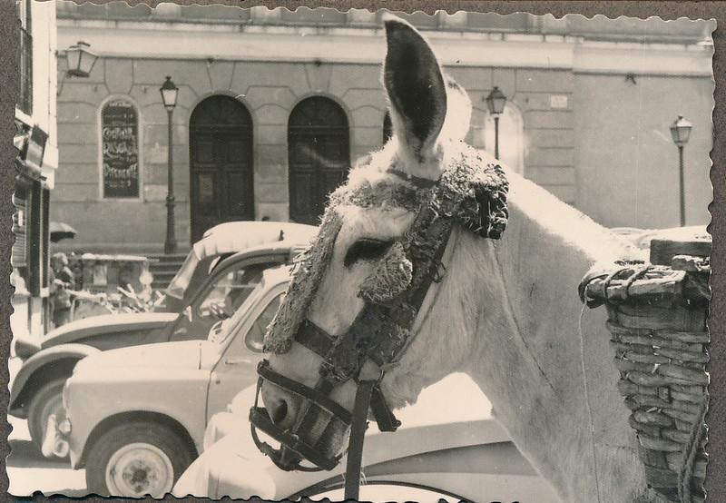 Un burro en la plaza mayor de Toledo a mediados del siglo XX. Fotografía de Victoriano de Tena Sardón