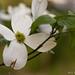 April Flowers III