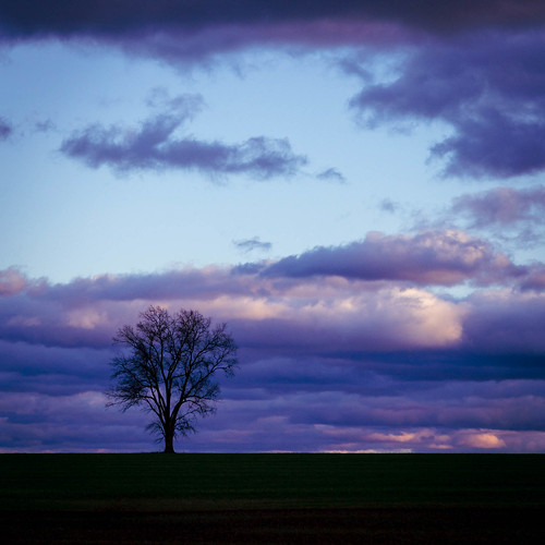 landscape tree clouds lonetree ronks pennsylvania unitedstatesofamerica