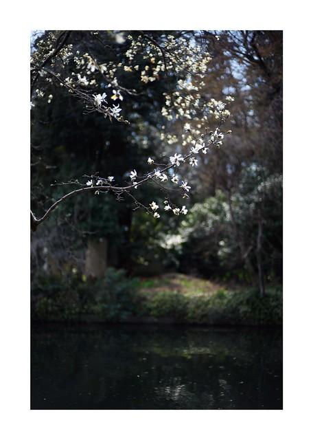 2019/3/17 - 12/15 photo by shin ikegami. - SONY ILCE‑7M2 / Carl Zeiss C Sonnar T* 1.5/50 ZM