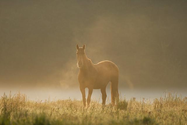 Cheval au matin