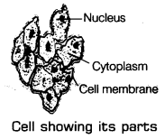 Nutrition in Plants Class 7 Notes Science Chapter 1 2