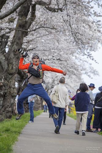 japan tohoku 日本 櫻花 sakura 6d tommy さくら 桜 サクラ