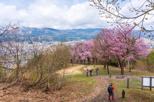 桜を振り返る