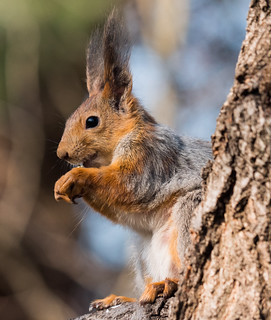 Squirrel isolated | by FromMoscowWithLove