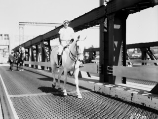 Horses crossing University Bridge, 1933