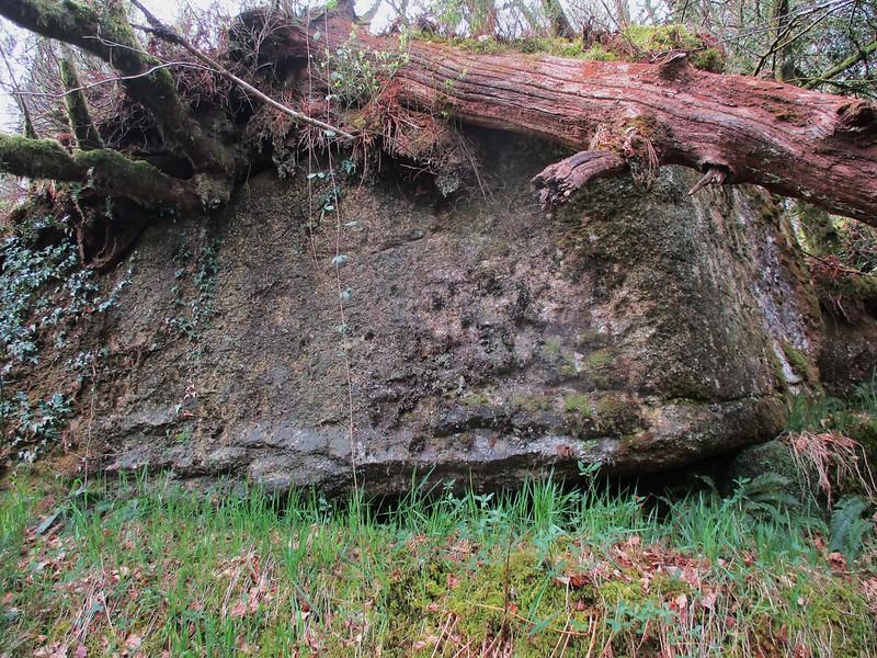 Brimpts Rocks Northen Wood Outcrop (front) SX 6725 7468