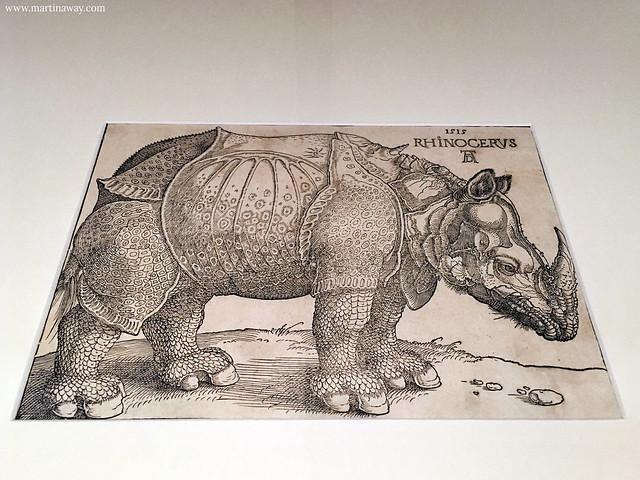 Il Rinoceronte a Palazzo Sturm