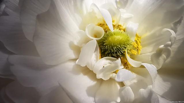 Le plaisir des fleurs