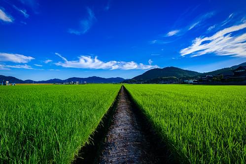 japan takeoshi sagaken saga kyushu rice landscape sky tanbo field a7iii takeo sony sunrise blue clouds