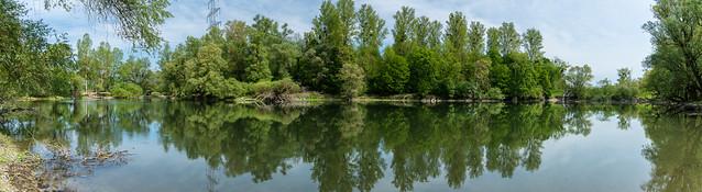 Der Rheinauen Wald
