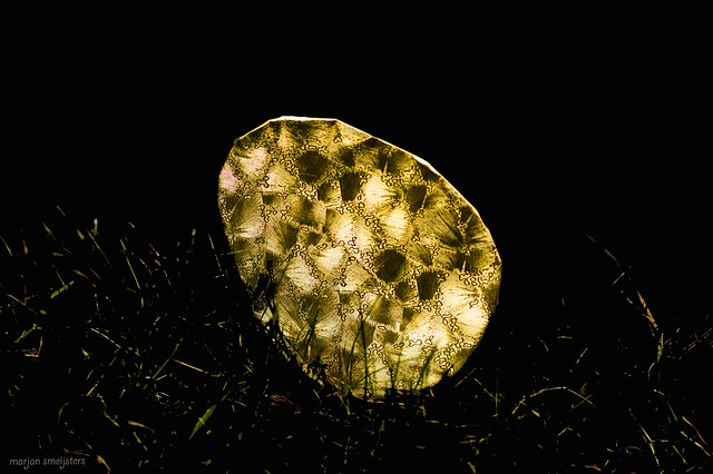 Origami Golden Egg (Peter Engel)
