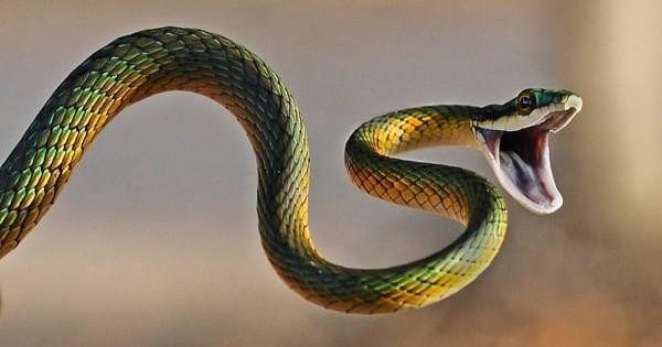 تفسير حلم الثعبان بألوانه