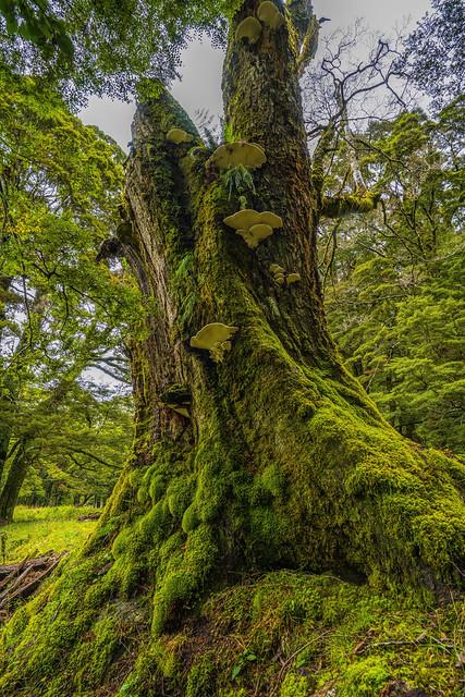 Mossy & Shroomy