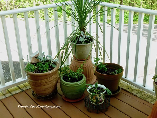 April in the Garden at FromMyCarolinaHome.com
